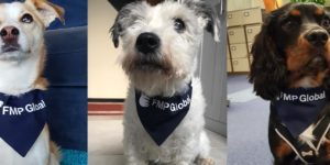 FMP Office Dogs